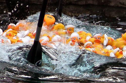 ducks-launch.jpg