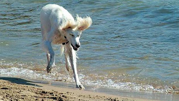 dog-beach-coe