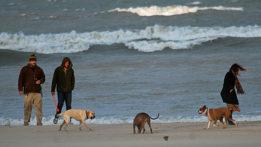 sandy-dogs-beachimg_8618