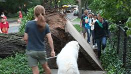 tree-dempster-sidewalkimg_3000