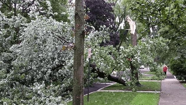 tree-hartrey-nr-colfax-20140905_182424