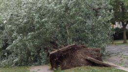700-block-brummel-tree-down-20150802_185337