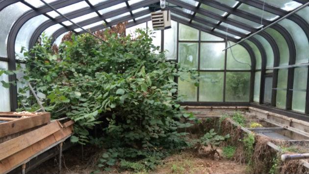harley-clarke-2015-coach-house-greenhouse