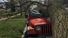 tree-on-car-160331-img_2953-luis