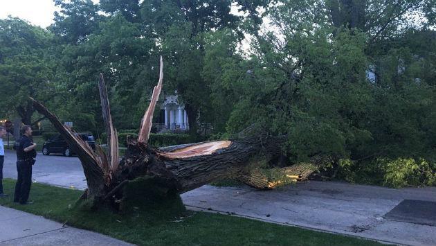 tree-down-300-davis-170517-epd