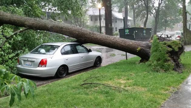 tree-on-car-bennett-north-of-harrison-20170614_174851