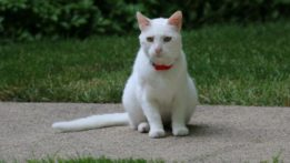 max-the-cat-img_0431