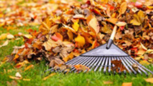 leaves_resized