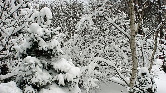 snow-120113img_5606