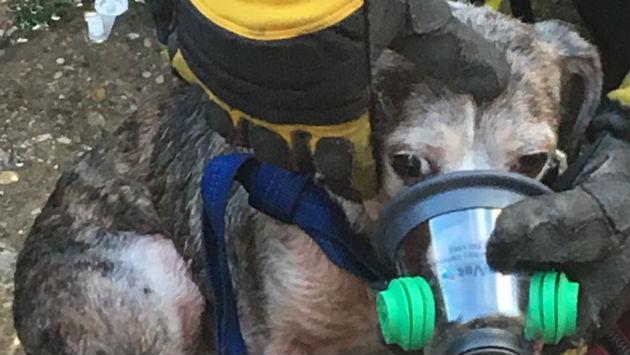 fire-dog-rescue-20190820-efd