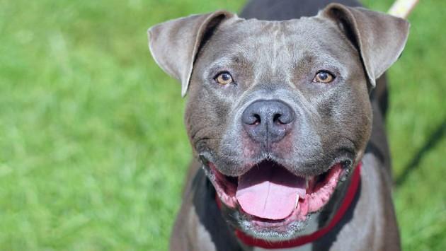 dog-evanston-animal-shelter-website-20200529